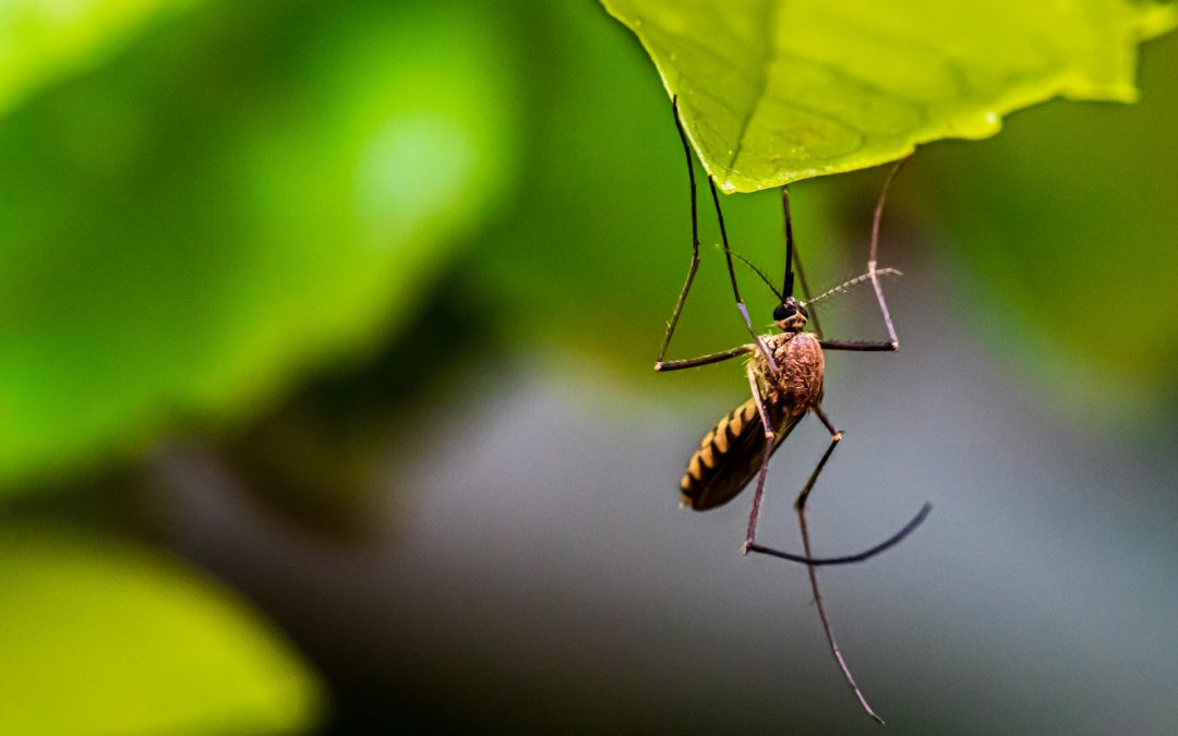 Naturalne i bezpieczne środki ochrony przed kleszczami i komarami