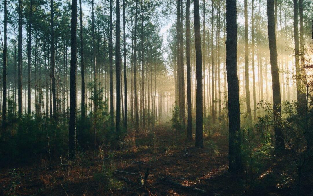 Sadzenie lasu – Twój prezent dla przyszłych pokoleń